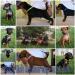Цвергпинчер / zwergpinscher / миниатюрный пинчер / miniature pinscher / щенки / puppies