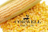Закупаю кукурузу, пшеницу и ячмень