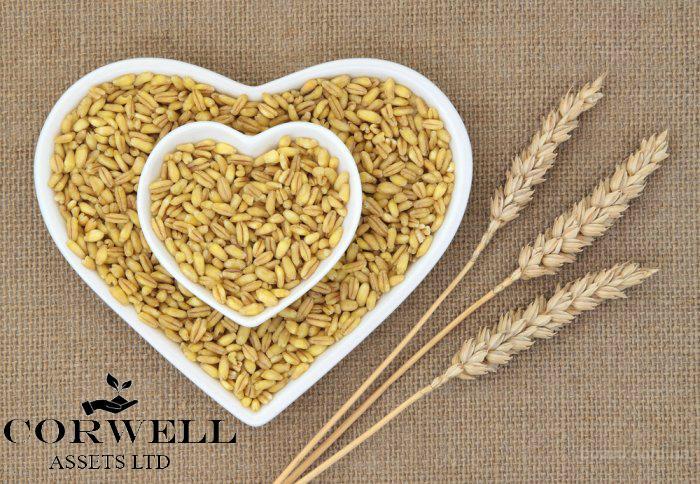 Постоянно закупаю зерновые, масличные и зернобобовые