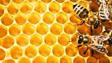 Мед різнотрав'я