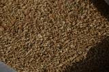 Продам на експорт чи на внутрішній ринок: насіння льону коричневого та золотистого, просо жовте та червоне, розторопшу,
