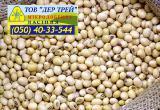Семена сои Аполло, урожай 2017года от компании Дер Трей