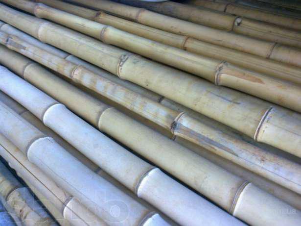 Бамбук, бамбуковые стволы - продам. Цена 5 грн. купить Бамбук ... e5d9f359f8b