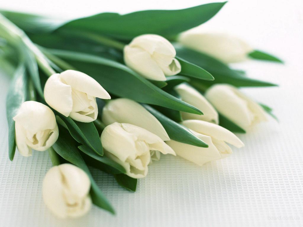 optom-deshevo-tsveti-optom-harkov-tyulpani-orhidei-kupit