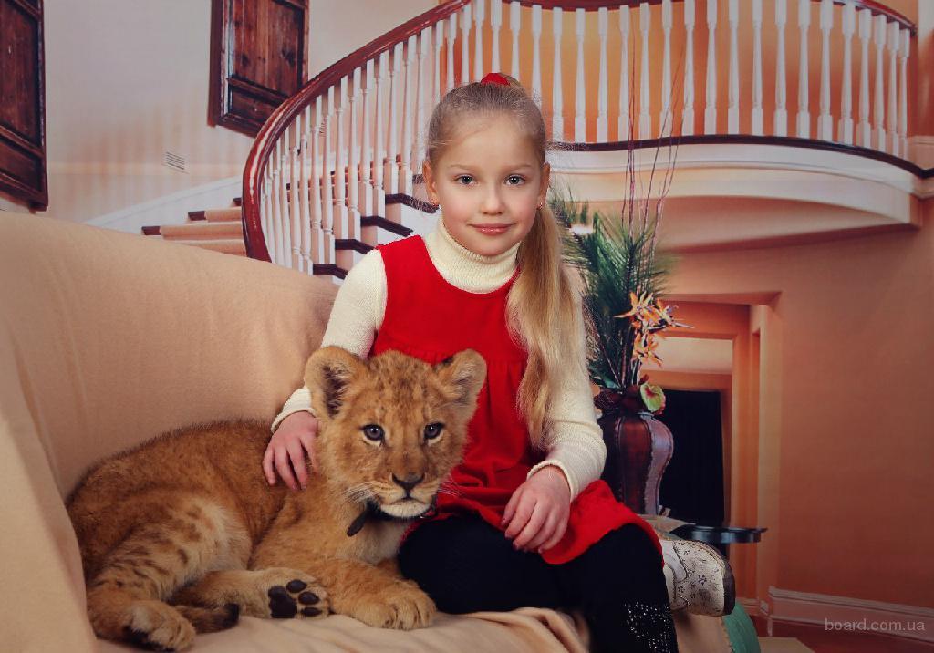 львенок в аренду на фотосессию