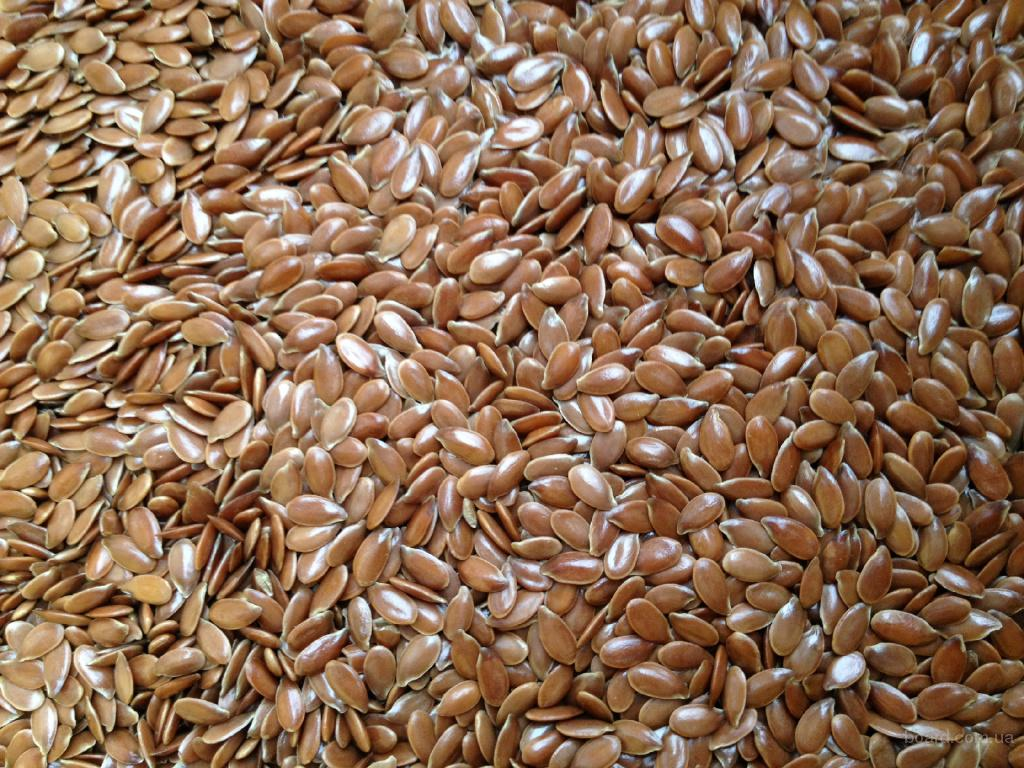 правящие картинка семена льна растения одна