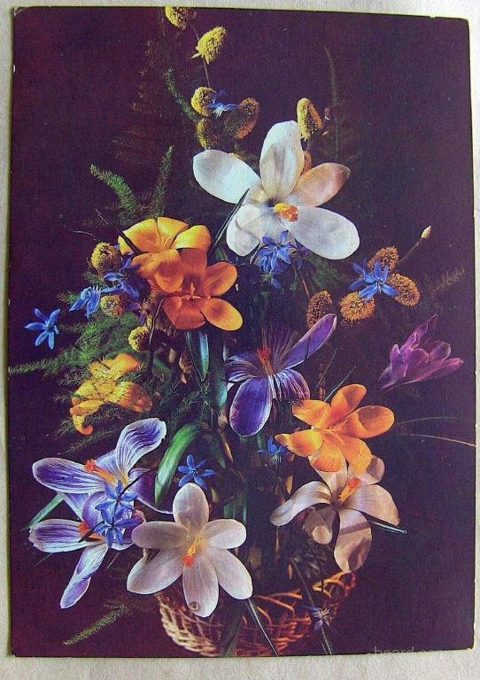 Советские открытки фото п костенко